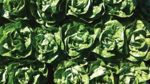 9 Leafy Greens Varieties You Need To Know