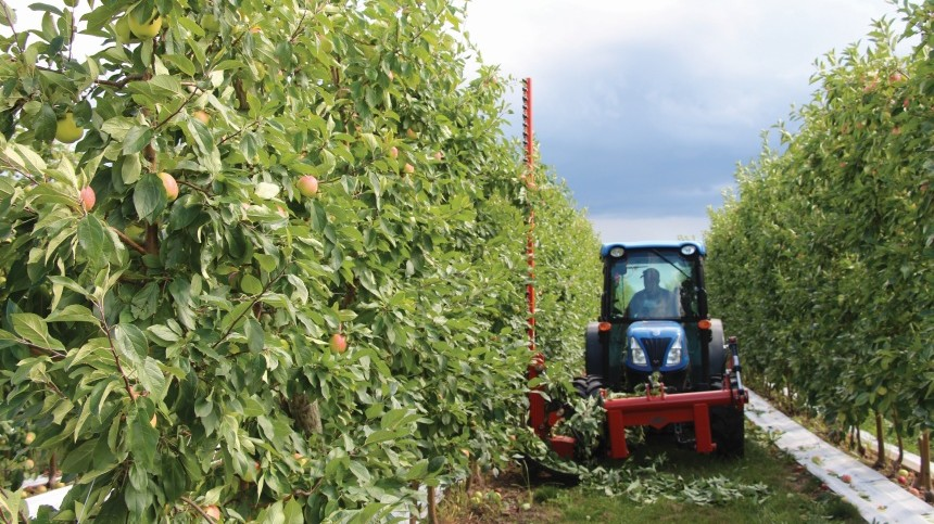 Is Your Orchard Ready For Mechanization? [Opinion]