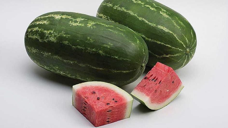 Allsweet Seeded 800F1 watermelon