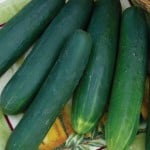 Diamondback cucumbers