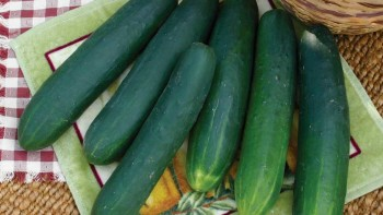 Diamondback cucumbers