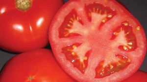 5 Juicy Tomatoes Florida Growers Should Consider