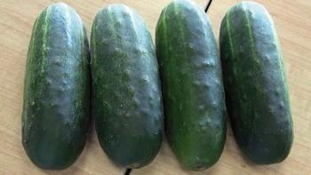 Max Pack cucumbers
