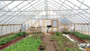 How To Determine The Right Greenhouse Structure For Your Operation