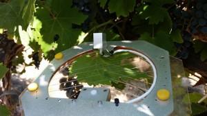 High-Tech Sensor System Allows For Precision Irrigation