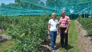 Timely Tips For A Healthy And Productive Berry Patch