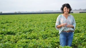 New Report Highlights Farmworker Opportunities In California Strawberry Fields