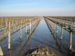 In the high-water year of 2011, Sustainable Conservation partnered with farmer Don Cameron of Terranova Ranch (Fresno County) to test the application of seasonal floodwater from the nearby Kings River onto active cropland (wine grapes) to help recharge the underlying aquifer.