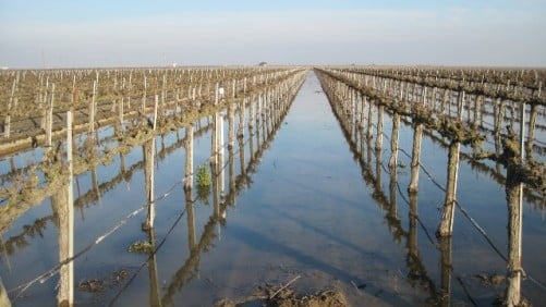 New Online Tool Helps Growers Determine Need for Groundwater Recharge