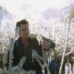 UF/IFAS professor Jeff Williamson checks blueberries for cold damage