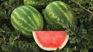 9 Watermelon Varieties You Need To Know For 2016