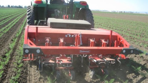 New Weeding Technology Available For Vegetable Growers