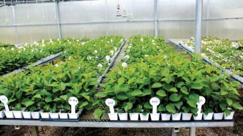 Biotechnology Company Partners With Grower To Develop New Cherry Varieties