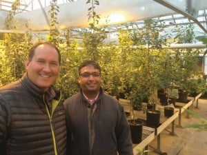 Tim Obrien, Vice President of Marketing and Business Development for Phytelligence and Dr. Amit Dhingra, of Washington State University and founder of Phytelligence pose for a photo in the WSU greenhouse in Pullman, WA. (Photos credit: Win Cowgill)