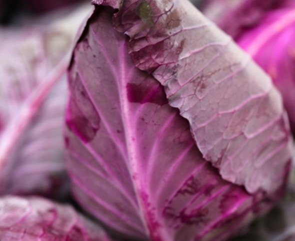 New Pointed Red Cabbage, Tomato To Be Showcased At Fruit Logistica