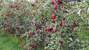 Washington Apple Education Foundation Awards $1 Million In Scholarships
