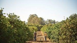 Sunkist Expands Organic Portfolio