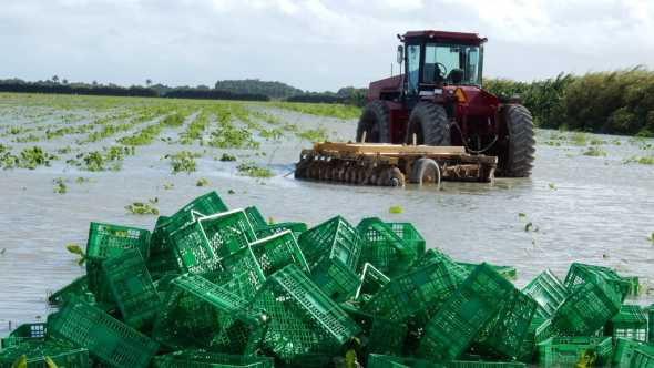 Flooded vegetable field in South Florida