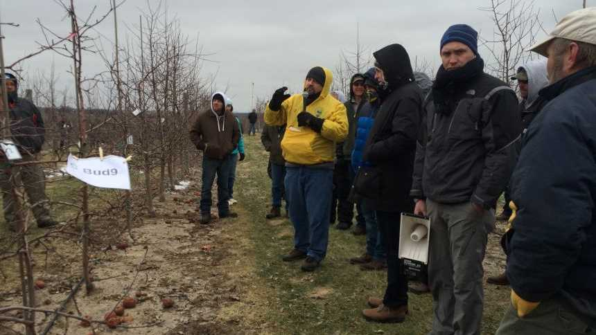 Gennaro Fazio talks about how Bud 9 performs in NC-140 rootstock trial on Honeycrisp at Joe Rasch Orchards LLC in Conklin, MI, during IFTA 2016.