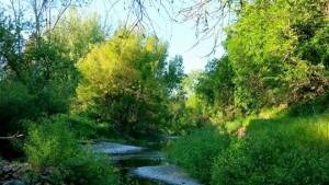 Restoring The Napa River