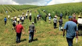 Convex landforms in Virginia are advantageous for grape growers as shown at this summer vineyard meeting. (Photo credit: Tremain Hatch)