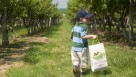 Apple picking at Belkin Family Lookout Farm FEATURE and free from Mass. Tourism