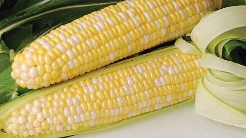 11 Top-Notch Sweet Corn Varieties For 2016
