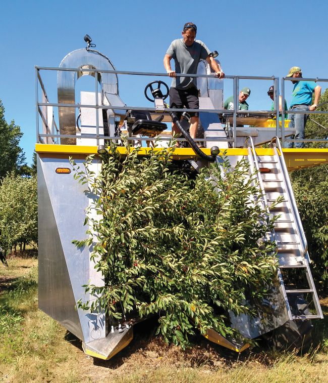 Rob Kolesar of Spring Brook Supply operates a Littau ORXL on a cherry block in 2015 at the Northwest Michigan Horticultural Research Center in Traverse City, MI. Spring Brook Supply is a Littau distributor in Southhaven, MI. (Photo credit: Ron Perry, MSU)