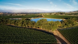 Wide Adoption Of Sustainable Winegrowing Practices InCalifornia