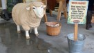 Wool harvest play market at Meadows Maze at Hopcott Farm FEATURE