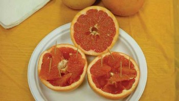 Florida red grapefruit samples