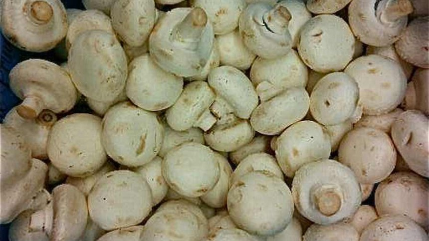 Genetically Engineered Mushroom Avoids Regulation