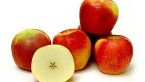 Will 'Ambrosia' Take The Best Apple Variety Title Again This Year?