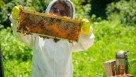 Beekeeper shows off honey comb at Churchview Farm
