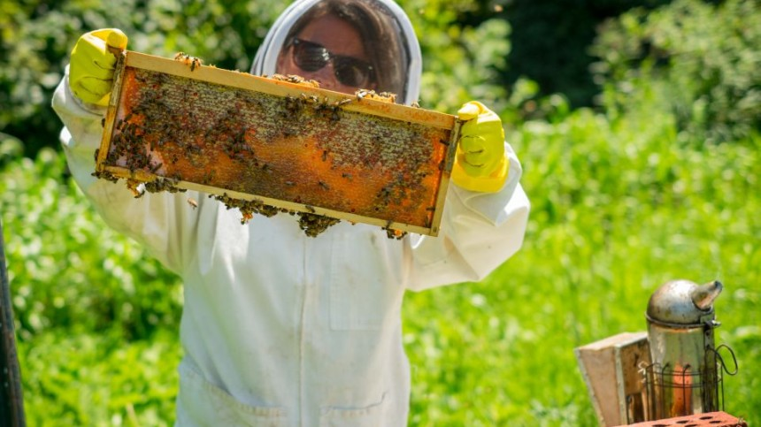 Survey: Beekeepers Lost 44% Of Bees Last Year