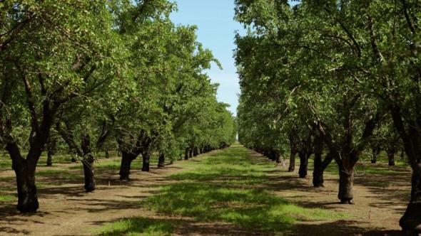 (Photo credit: USDA via Almond Board of California)