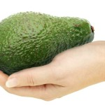 a freshly picked avocado cradled in hand