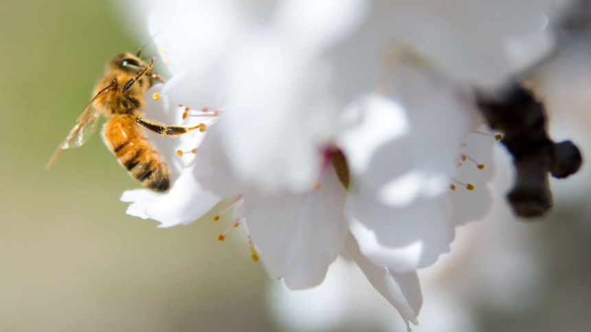 App Helps Protect Bees In The Field