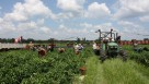 farm labor pic for web