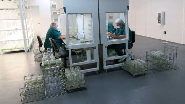 Labworkers at AgroMillora's new tissue culture facility in Florida