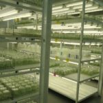 AgroMillora's new tissue culture facility in Wildwood, FL