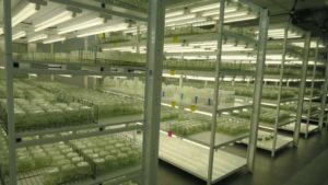 Florida Citrus Tissue Culture Lab Opens To Great Expectations