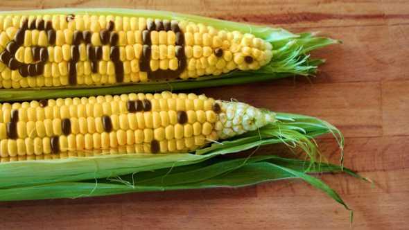 anti-GMO corn spoof via social media