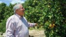 Marty McKenna inspects a tree in his citrus grove