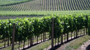 Founding Member of Delicato Vineyards Dies