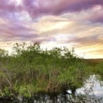 Florida Everglades swamp shot at sunset
