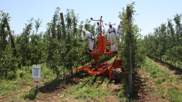These workers use a platform from Automated Ag for hand thinning. (Photo credit: Christina Herrick)