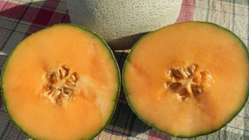 Shockwave, a long shelf-life cantaloupe with higher sugar content than most varieties is available from Holmes Seed Co. and Harris Seeds. Credit: Holmes Seed Co.