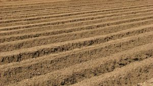 Soil Health is Much More than Nutrient Levels