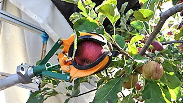 upclose of Israeli apple harvester